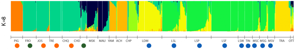 Figure 2 - Histogram showing the percentage of each individual belonging to the different genetic groups. Each vertical bar corresponds to an individual sampled in a given body of water and represents its degree of belonging (or mixture) to a given group. Each color represents a genetically distinct group. For example, there is considerable genetic similarity between individuals in Frontière Lake, Joseph Lake and Tremblant Lake (FRO, JOS, and TRE respectively), all of which were seeded from the Chautauqua Lake (CHQ) source. Conversely, there is great genetic distinction between Lake Traverse Muskellunge (TRA) and all other bodies of water. Orange dots : source of individuals used for sowing. Green dots : lakes and rivers where the muskellunge was absent or in low abundance before stocking. Blue dots : sections of the St. Lawrence River and des Deux-Montagnes Lake. For abbreviations meaning, see Figure 1.