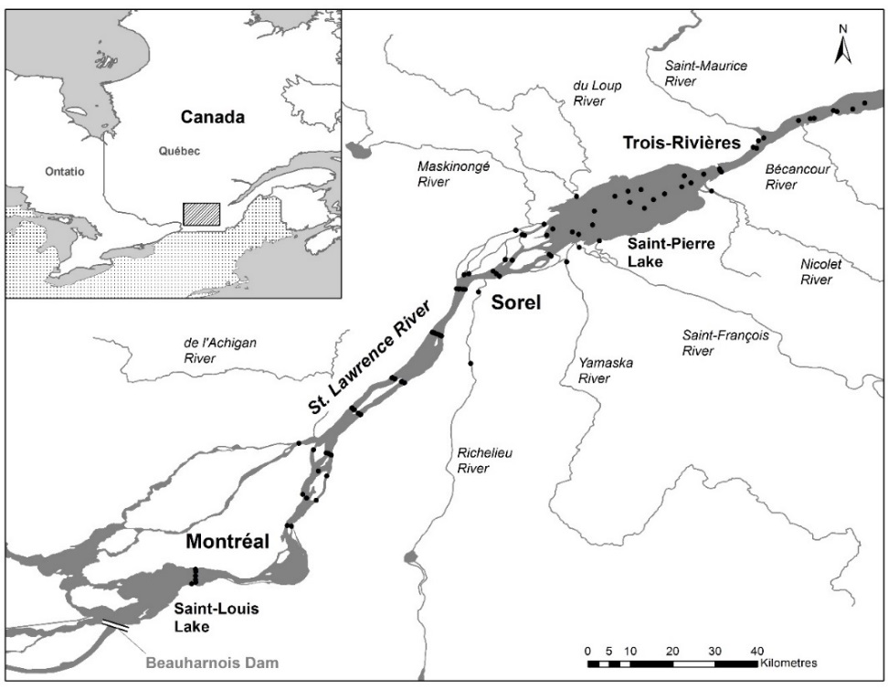 Figure 4 - Location of fixed acoustic receptors used to measure the passage of Muskellunge tagged in Lake Saint-Pierre in 2018. The stations installed between Gentilly and Québec city, to the right of this map, were not represented.